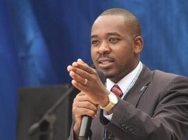 Nelson Chamisa to rename party